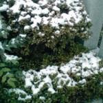 本日の積雪